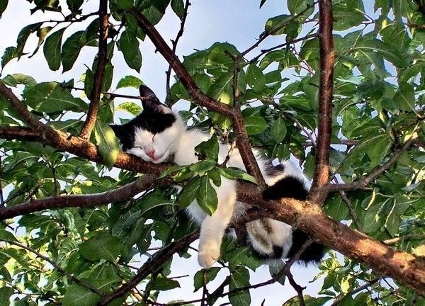 cat-sleeping-in-tree.jpg