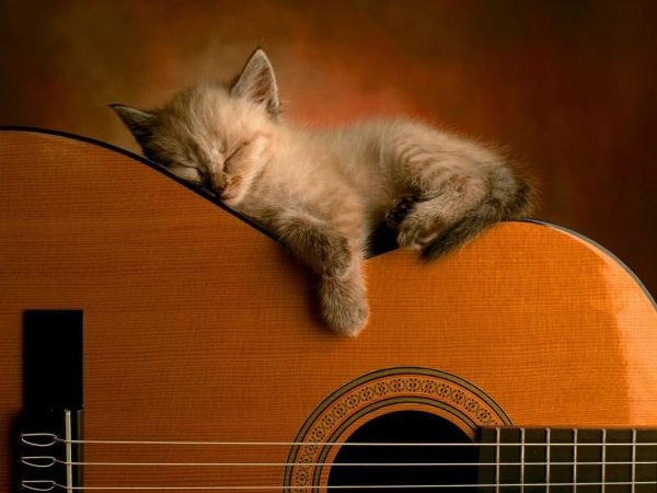 cat-sleeping-on-guitar.jpg