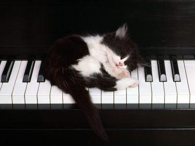cat-sleeping-on-piano.jpg
